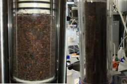 Adsorption column filled with cork granules (right) and  brown macroalgae (left)