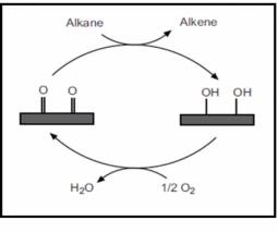 Oxidative dehydrogenation mechanism involving the quinone-hydroquinone redox cycle