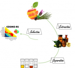 Development of processes for terpenes and terpenoids purification