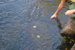Sampling surface water for chemical analyses