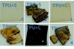 TPU samples modified with starch (TPU+S), cellulose (TPU+C) and lignin (TPU+L), recovered after 1 and 4 months of the biodegradation test in soil at 58ºC