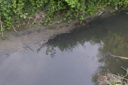 Stream contaminated by wastewater discharges from pig farms (Lis River basin)