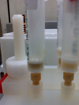 SPE adsorbents after percolation of wastewater samples, before and after ozonation treatment.