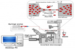 Microfluidic set-up for haemocompatibility studies of red blood cells (RBCs) in contact with magnetic nanoparticles (MNPs)