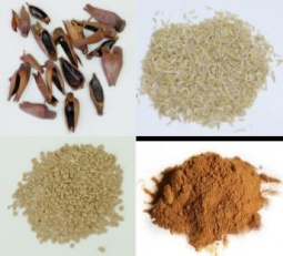 Examples of biobased substrates (Brasilian pine-fruit shell, rice shell, olive stone and lignin)