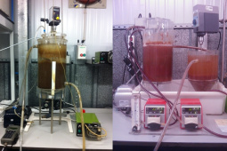 Sequential batch reactor (right) and activated sludge biological reactor (left) at lab-scale